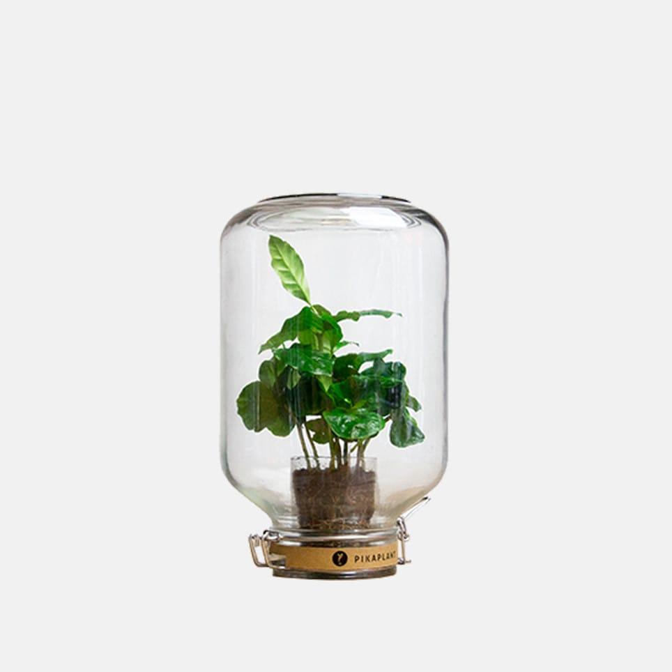 Pikaplant Jar